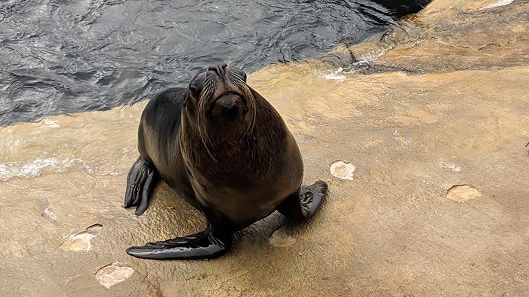 The Cornish Seal Sanctuary, Gweek