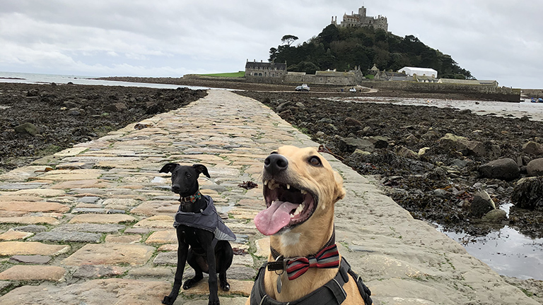 Our dreamy, doggy-friendly getaway at Meris
