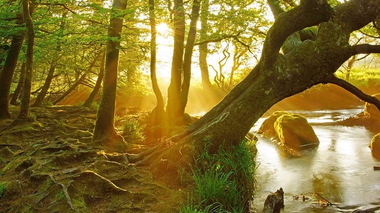 6 River Walks in Cornwall