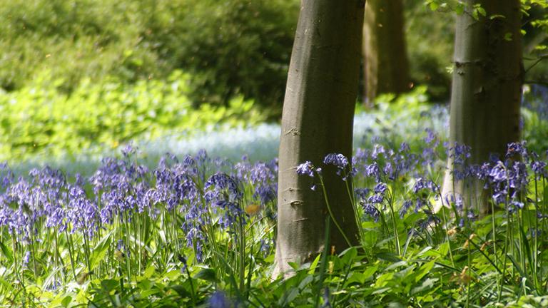 Batsford Arboretum, Moreton-in-Marsh