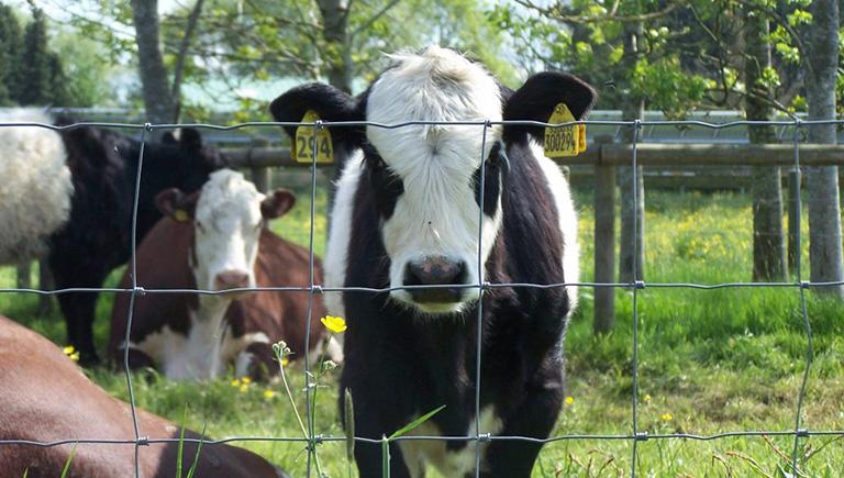 Cattle Country Adventure Farm Park, near Berkeley