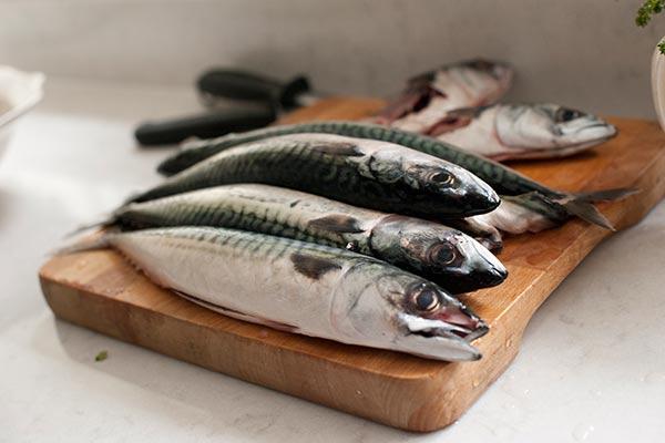 Fishing for fresh mackerel