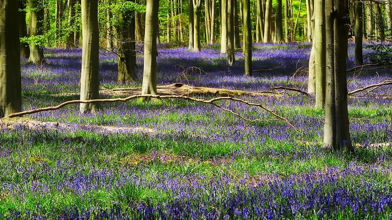 Woodlands of the South West