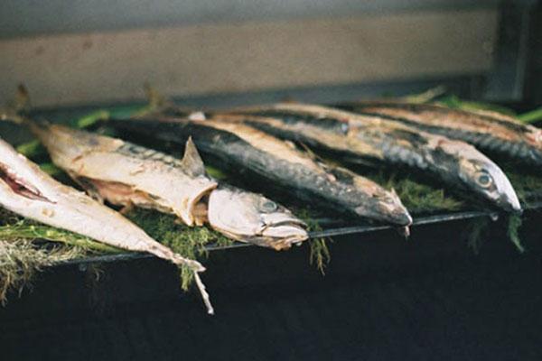 Fish in Cornwall